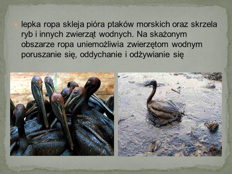 lepka ropa skleja pióra ptaków morskich oraz skrzela ryb i innych zwierząt wodnych.