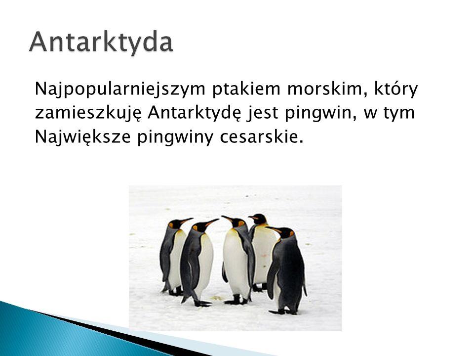 Antarktyda Najpopularniejszym ptakiem morskim, który zamieszkuję Antarktydę jest pingwin, w tym Największe pingwiny cesarskie.