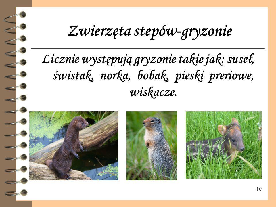 Zwierzęta stepów-gryzonie