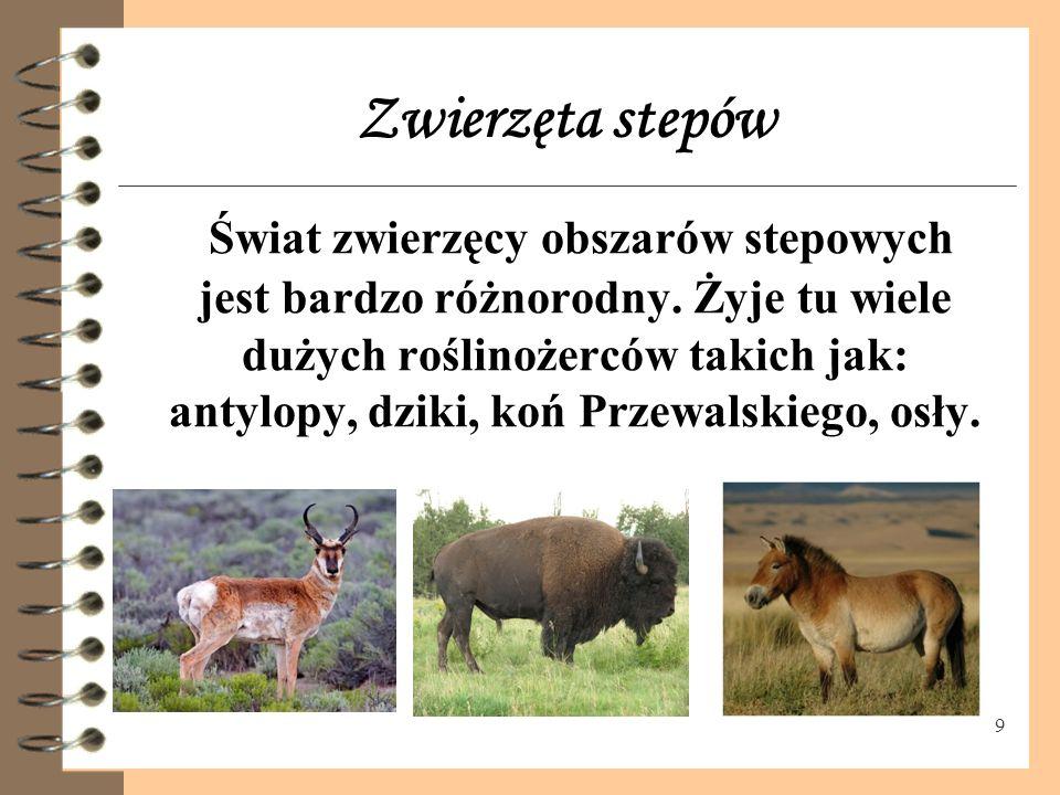 Zwierzęta stepów