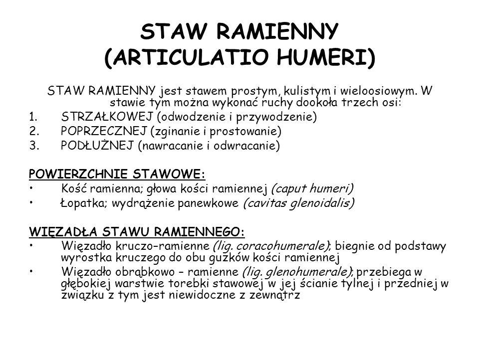 STAW RAMIENNY (ARTICULATIO HUMERI)