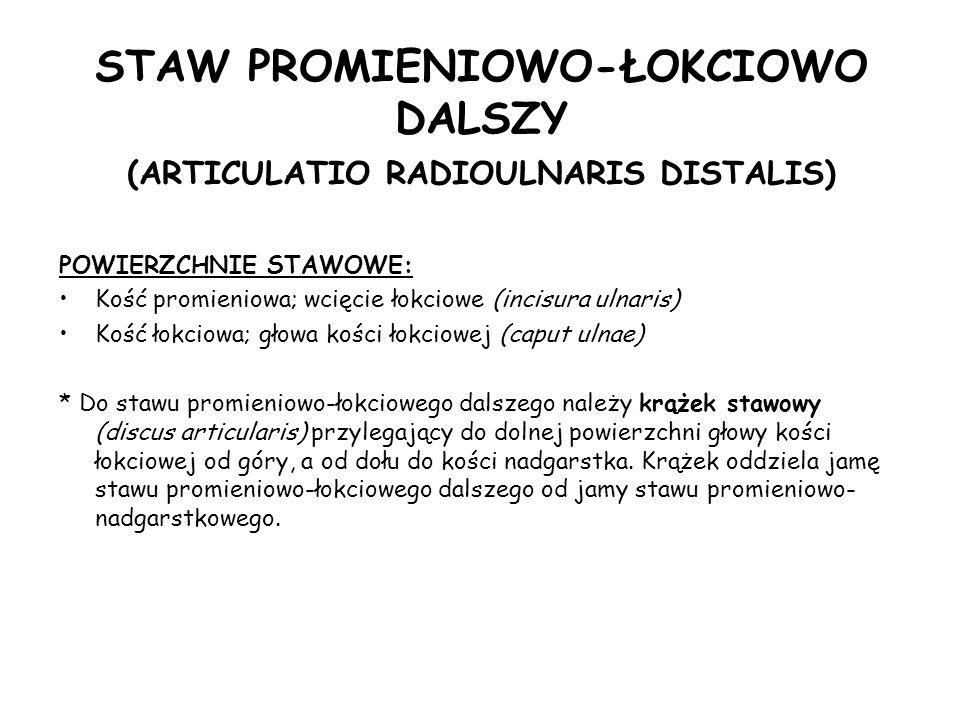 STAW PROMIENIOWO-ŁOKCIOWO DALSZY (ARTICULATIO RADIOULNARIS DISTALIS)