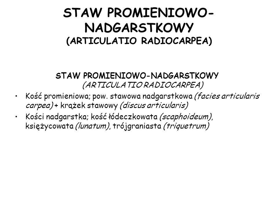 STAW PROMIENIOWO-NADGARSTKOWY (ARTICULATIO RADIOCARPEA)