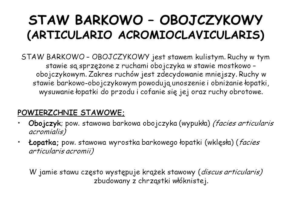 STAW BARKOWO – OBOJCZYKOWY (ARTICULARIO ACROMIOCLAVICULARIS)
