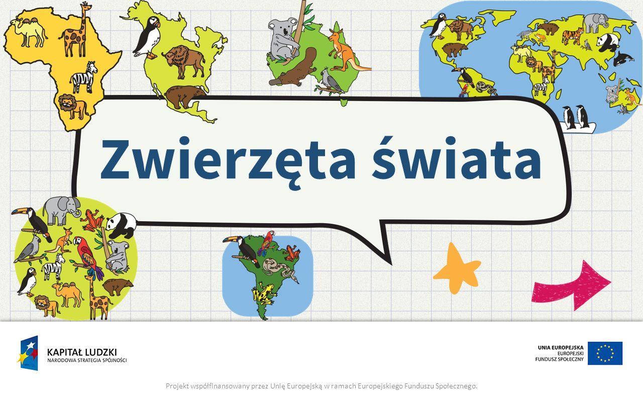 Zwierzęta świata Projekt współfinansowany przez Unię Europejską w ramach Europejskiego Funduszu Społecznego.