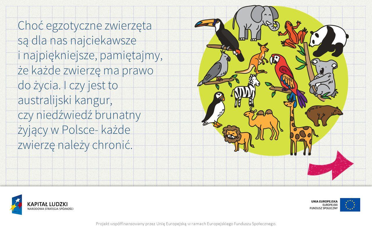 Choć egzotyczne zwierzęta są dla nas najciekawsze i najpiękniejsze, pamiętajmy, że każde zwierzę ma prawo do życia. I czy jest to australijski kangur, czy niedźwiedź brunatny żyjący w Polsce- każde zwierzę należy chronić.