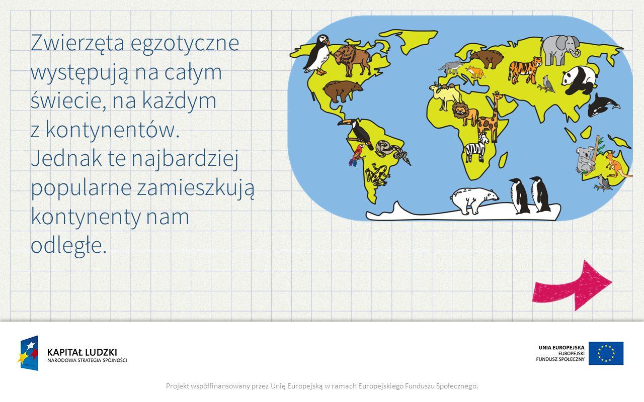 Zwierzęta egzotyczne występują na całym świecie, na każdym z kontynentów. Jednak te najbardziej popularne zamieszkują kontynenty nam odległe.
