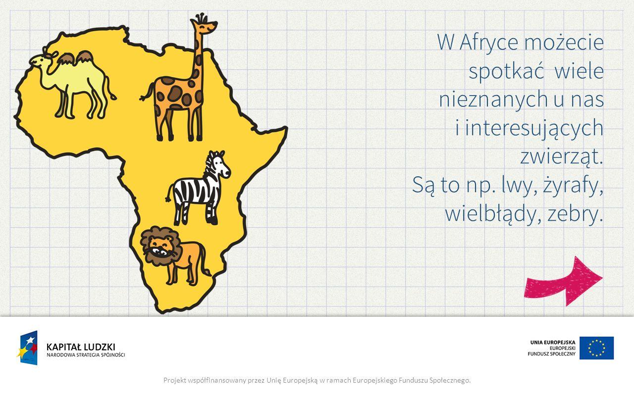 Są to np. lwy, żyrafy, wielbłądy, zebry.