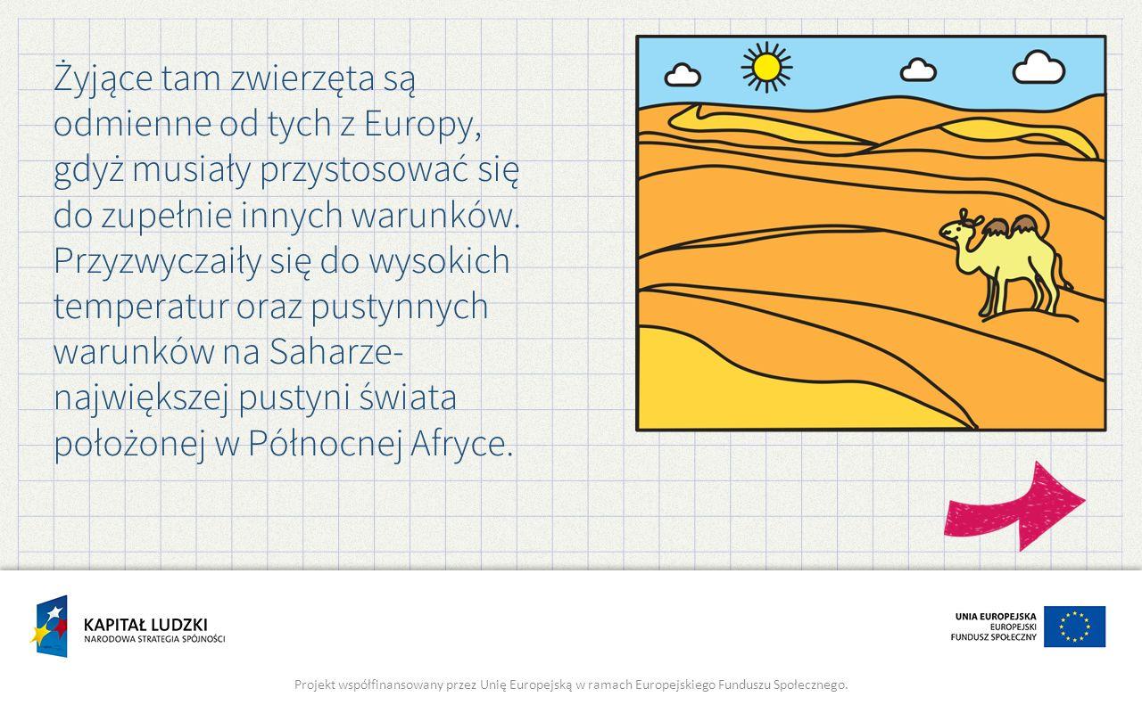 Żyjące tam zwierzęta są odmienne od tych z Europy, gdyż musiały przystosować się do zupełnie innych warunków. Przyzwyczaiły się do wysokich temperatur oraz pustynnych warunków na Saharze- największej pustyni świata położonej w Północnej Afryce.