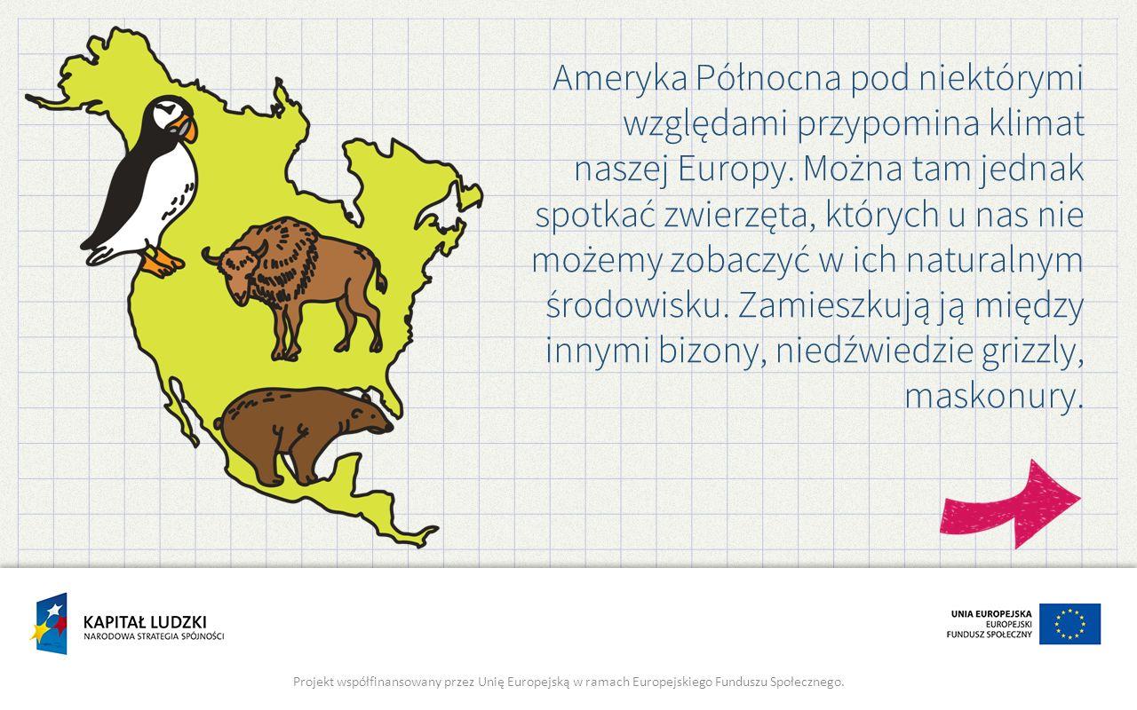 Ameryka Północna pod niektórymi względami przypomina klimat naszej Europy. Można tam jednak spotkać zwierzęta, których u nas nie możemy zobaczyć w ich naturalnym środowisku. Zamieszkują ją między innymi bizony, niedźwiedzie grizzly, maskonury.