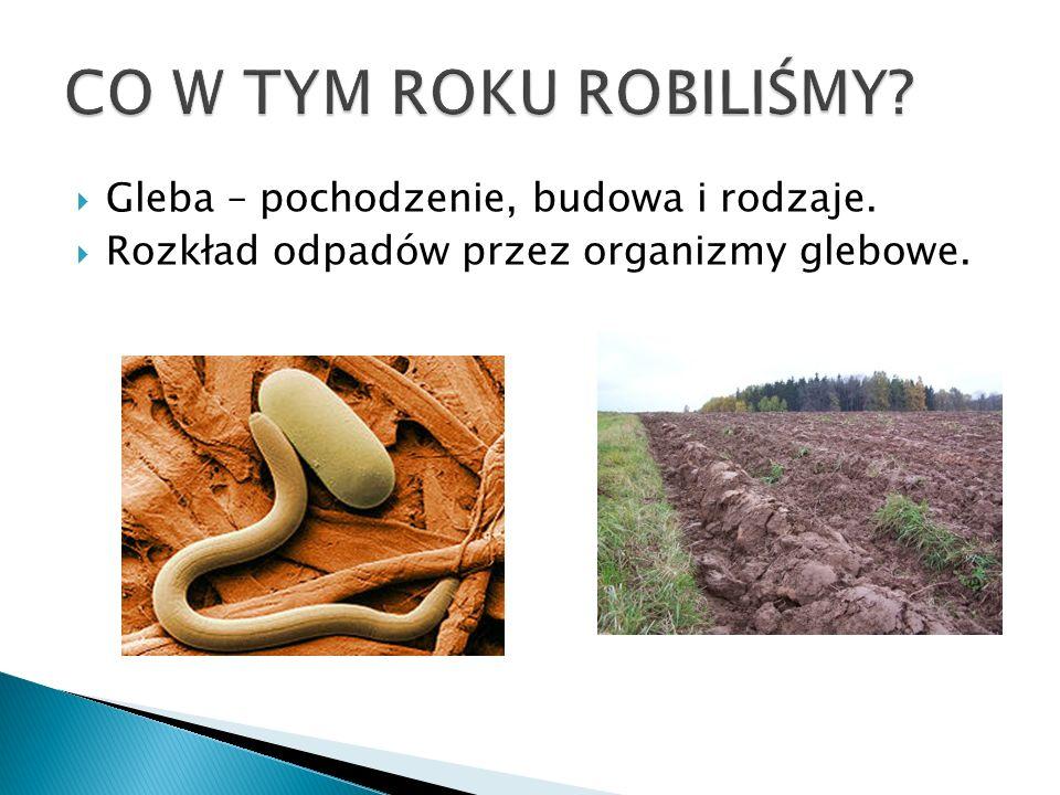 CO W TYM ROKU ROBILIŚMY Gleba – pochodzenie, budowa i rodzaje.