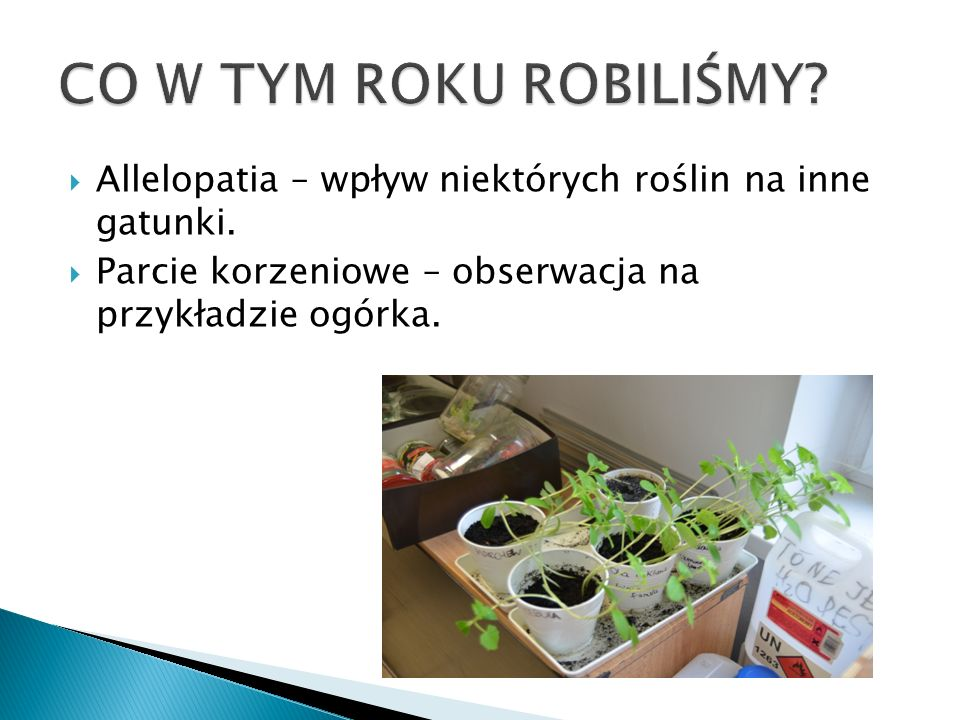 CO W TYM ROKU ROBILIŚMY. Allelopatia – wpływ niektórych roślin na inne gatunki.