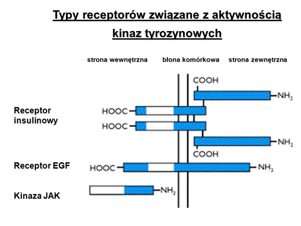 Typy receptorów związane z aktywnością