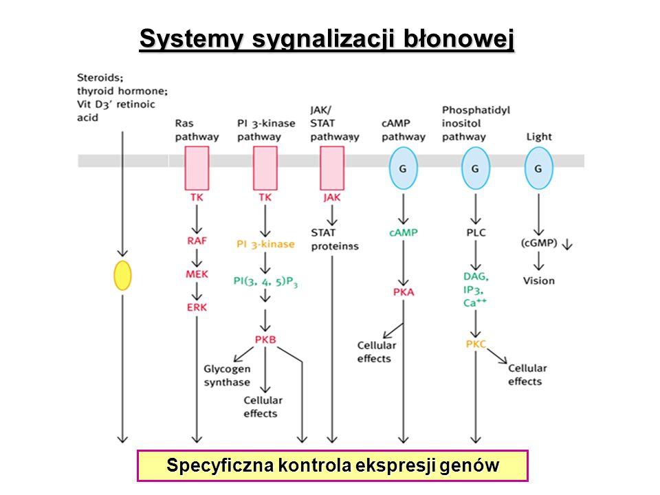 Specyficzna kontrola ekspresji genów