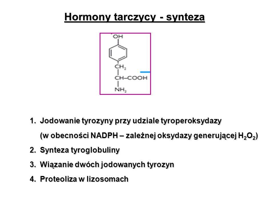 Hormony tarczycy - synteza