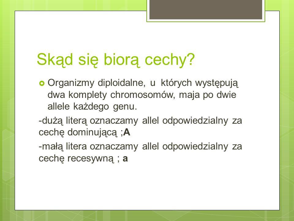 Skąd się biorą cechy Organizmy diploidalne, u których występują dwa komplety chromosomów, maja po dwie allele każdego genu.