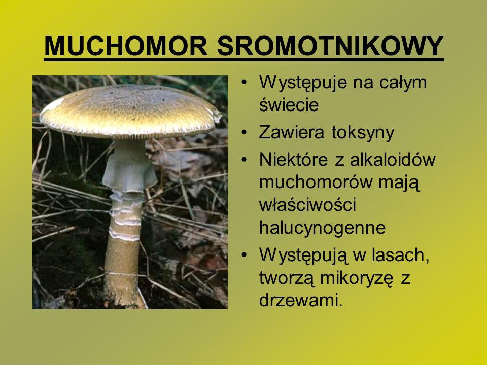MUCHOMOR SROMOTNIKOWY