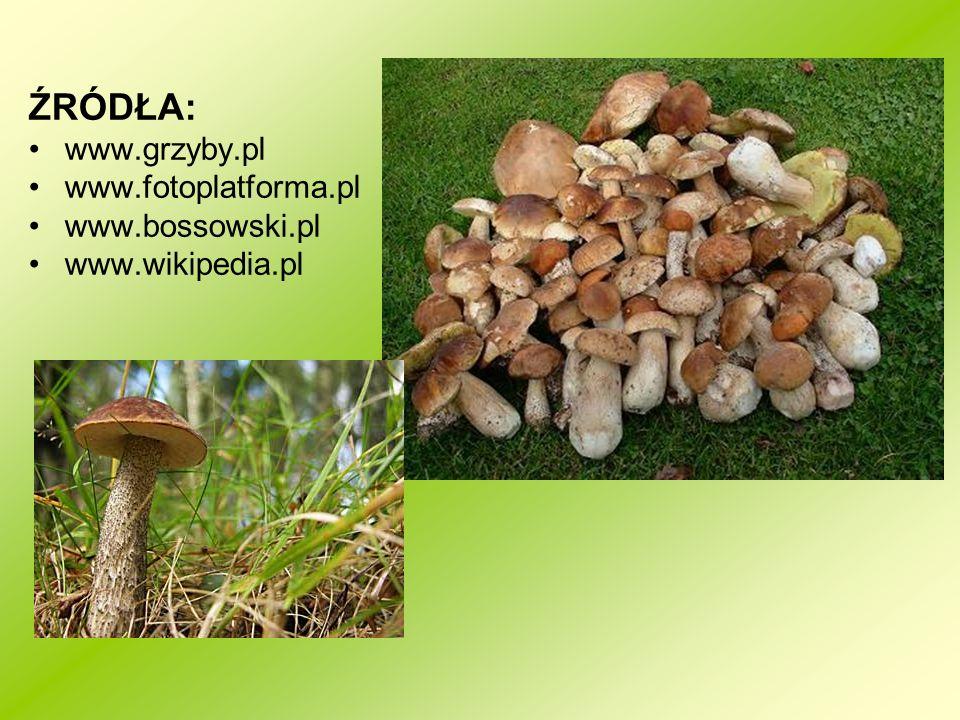 ŹRÓDŁA: www.grzyby.pl www.fotoplatforma.pl www.bossowski.pl