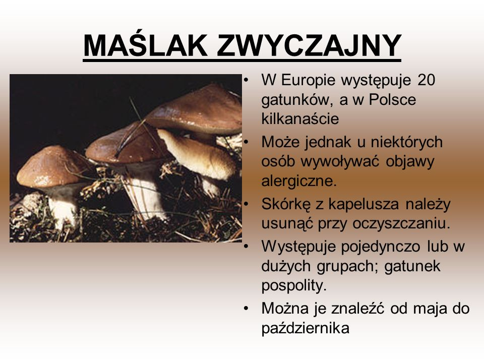 MAŚLAK ZWYCZAJNY W Europie występuje 20 gatunków, a w Polsce kilkanaście. Może jednak u niektórych osób wywoływać objawy alergiczne.