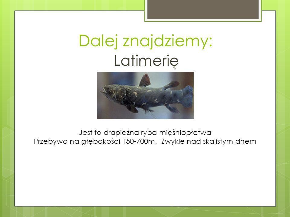Dalej znajdziemy: Latimerię Jest to drapieżna ryba mięśniopłetwa
