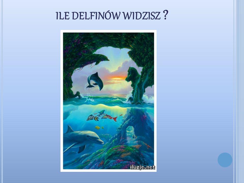 ile delfinów widzisz