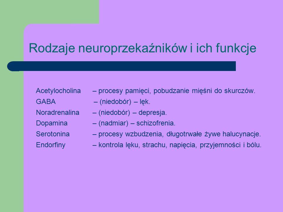 Rodzaje neuroprzekaźników i ich funkcje