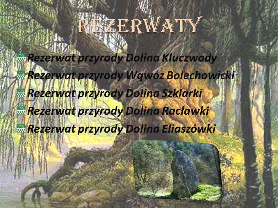 Rezerwaty Rezerwat przyrody Dolina Kluczwody