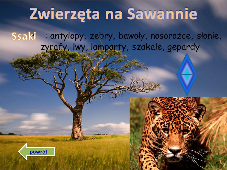 Zwierzęta na Sawannie Ssaki