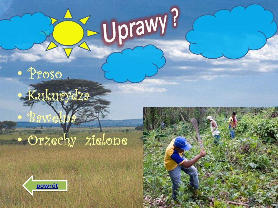 Uprawy Proso Kukurydza Bawełna Orzechy zielone powrót