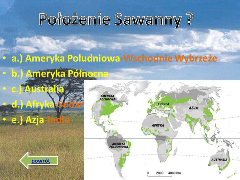 Położenie Sawanny a.) Ameryka Południowa-Wschodnie Wybrzeże