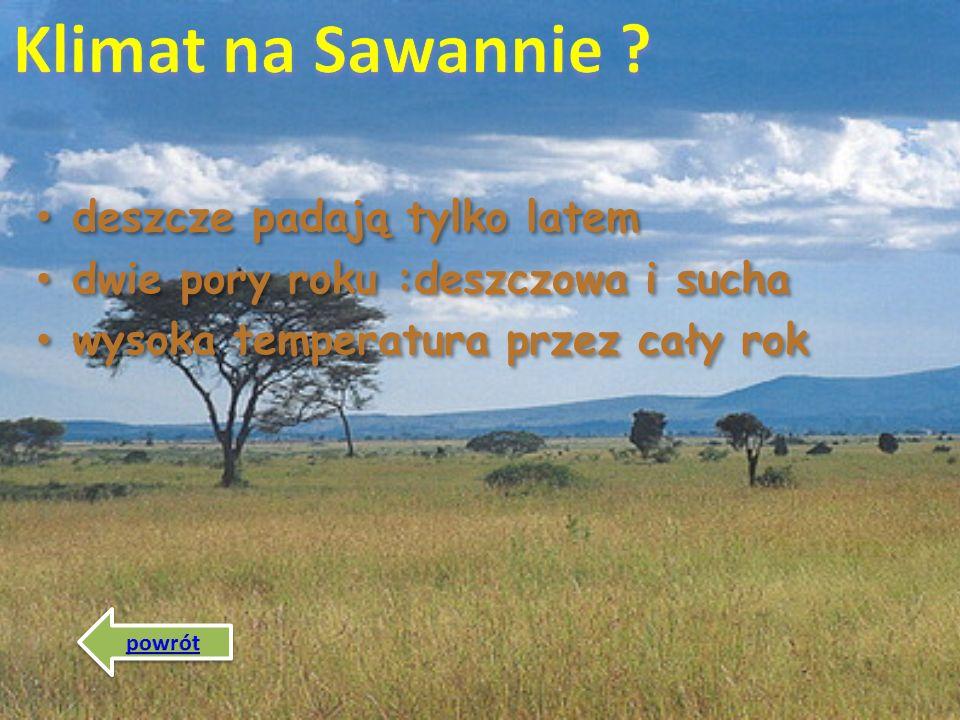 Klimat na Sawannie deszcze padają tylko latem