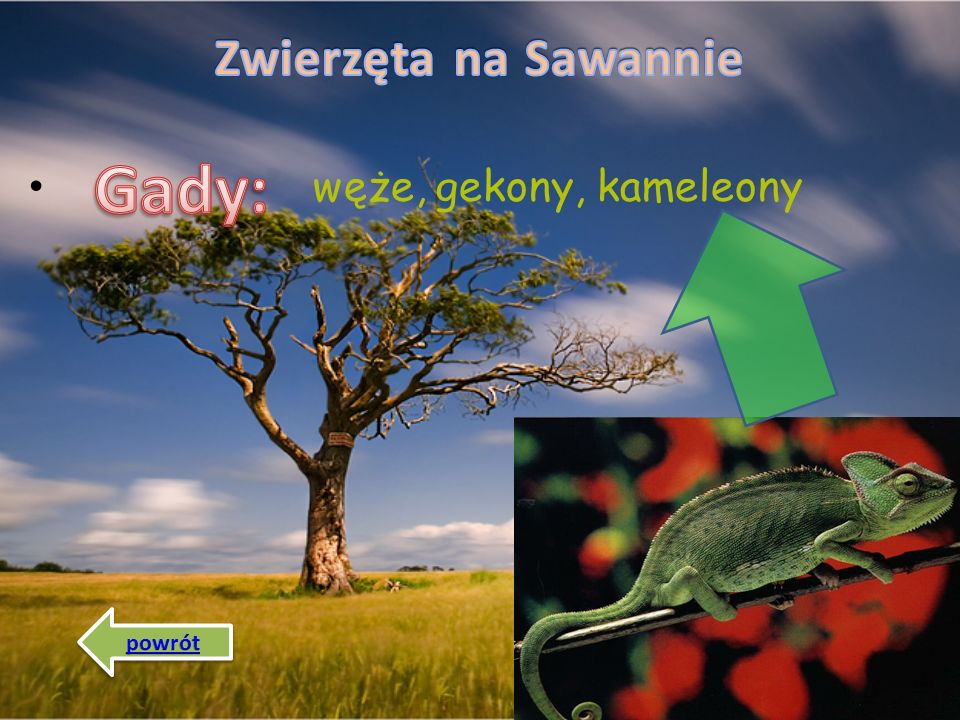 Zwierzęta na Sawannie Gady: węże, gekony, kameleony powrót