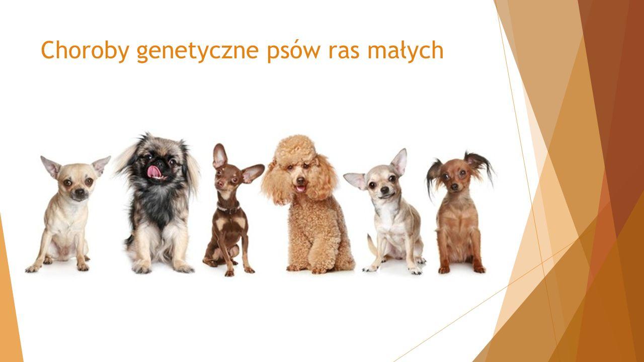 Choroby genetyczne psów ras małych