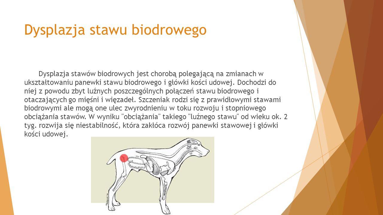 Dysplazja stawu biodrowego
