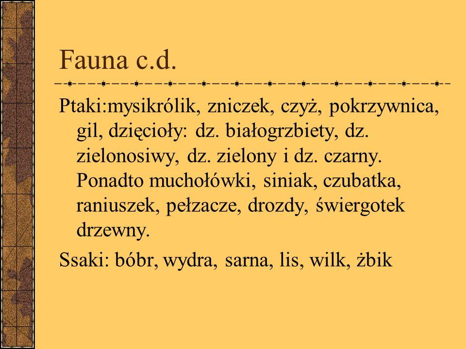 Fauna c.d.