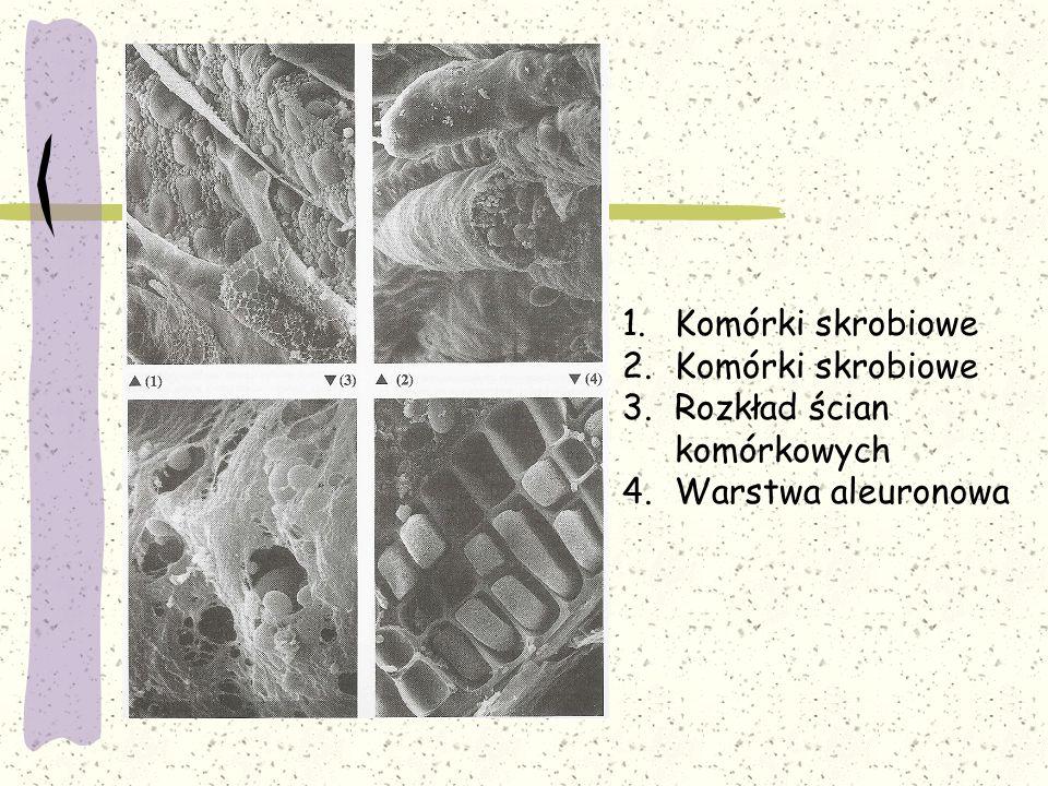 Komórki skrobiowe Rozkład ścian komórkowych Warstwa aleuronowa