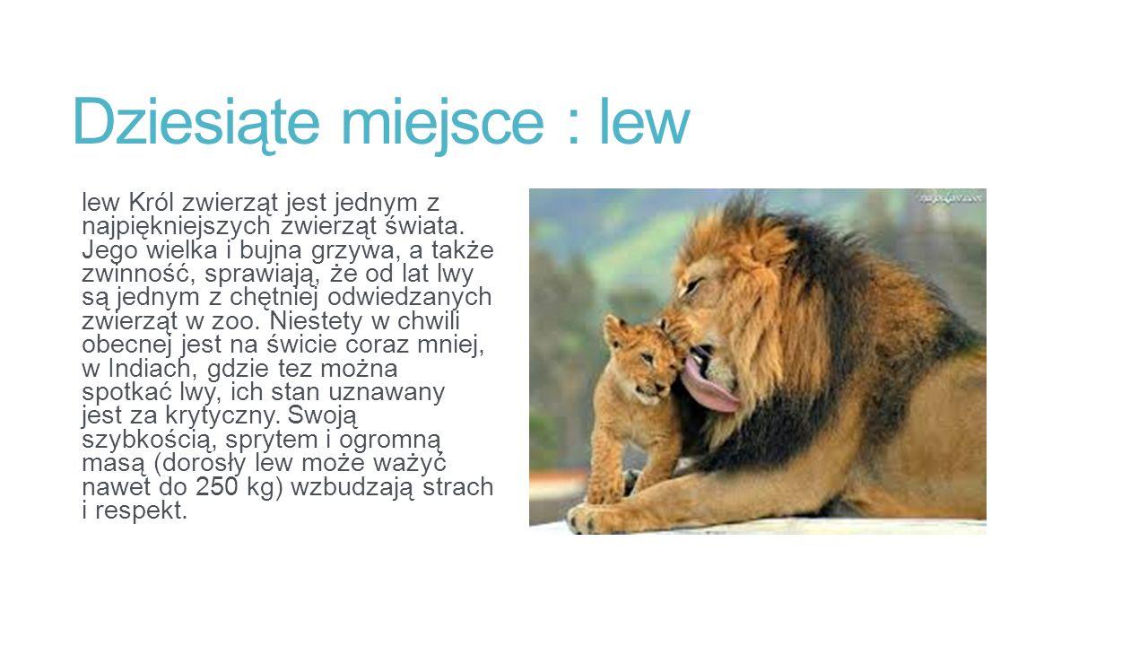Dziesiąte miejsce : lew