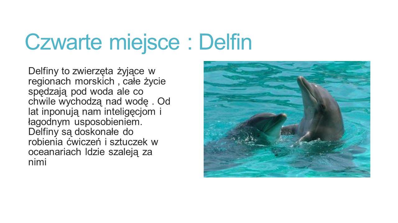 Czwarte miejsce : Delfin