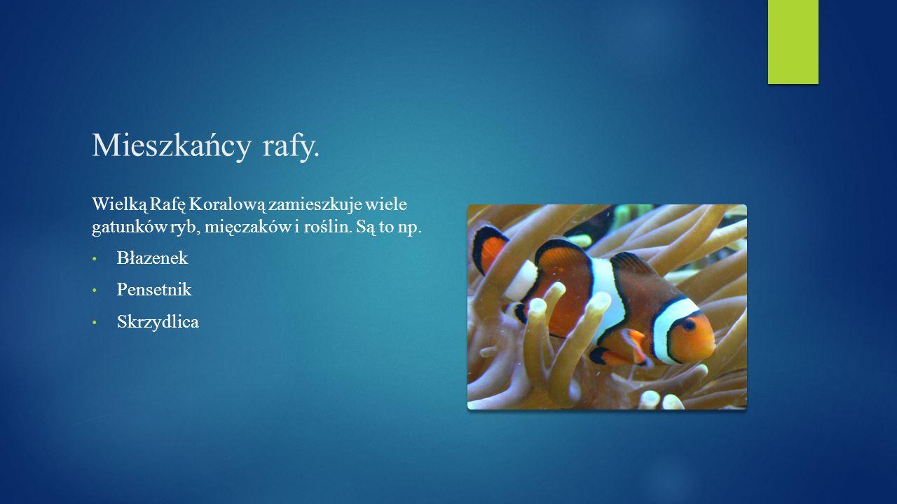 Mieszkańcy rafy. Wielką Rafę Koralową zamieszkuje wiele gatunków ryb, mięczaków i roślin. Są to np.