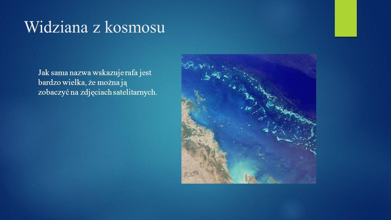 Widziana z kosmosu Jak sama nazwa wskazuje rafa jest bardzo wielka, że można ją zobaczyć na zdjęciach satelitarnych.