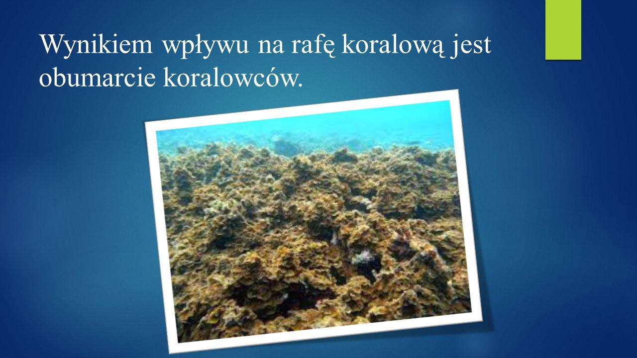 Wynikiem wpływu na rafę koralową jest obumarcie koralowców.