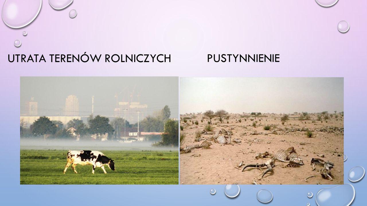 Utrata terenów rolniczych