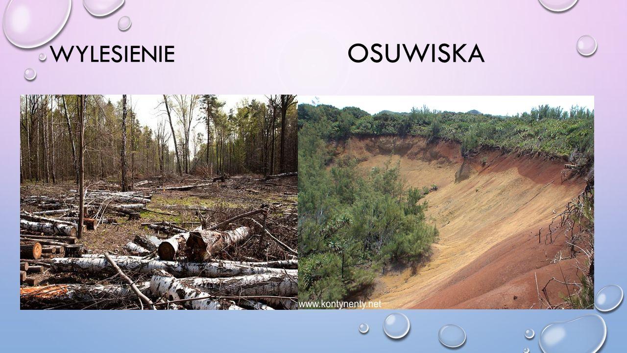 Wylesienie Osuwiska