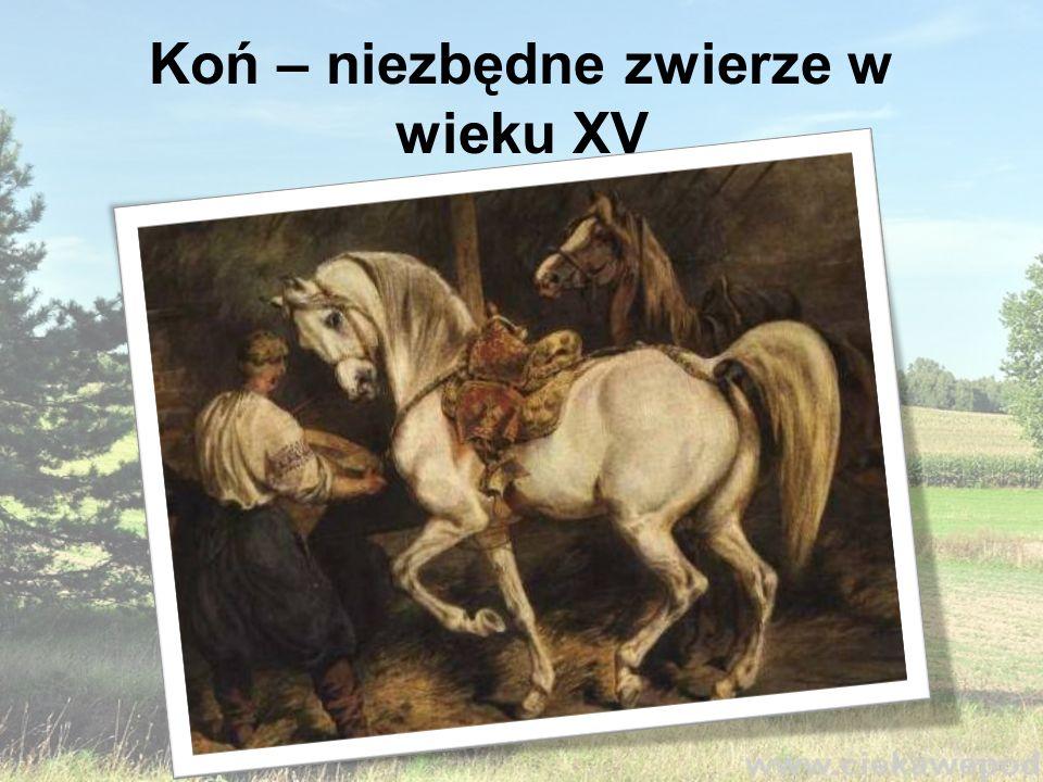 Koń – niezbędne zwierze w wieku XV
