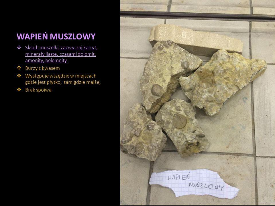 WAPIEŃ MUSZLOWY Skład: muszelki, zazwyczaj kalcyt, minerały ilaste, czasami dolomit, amonity, belemnity.