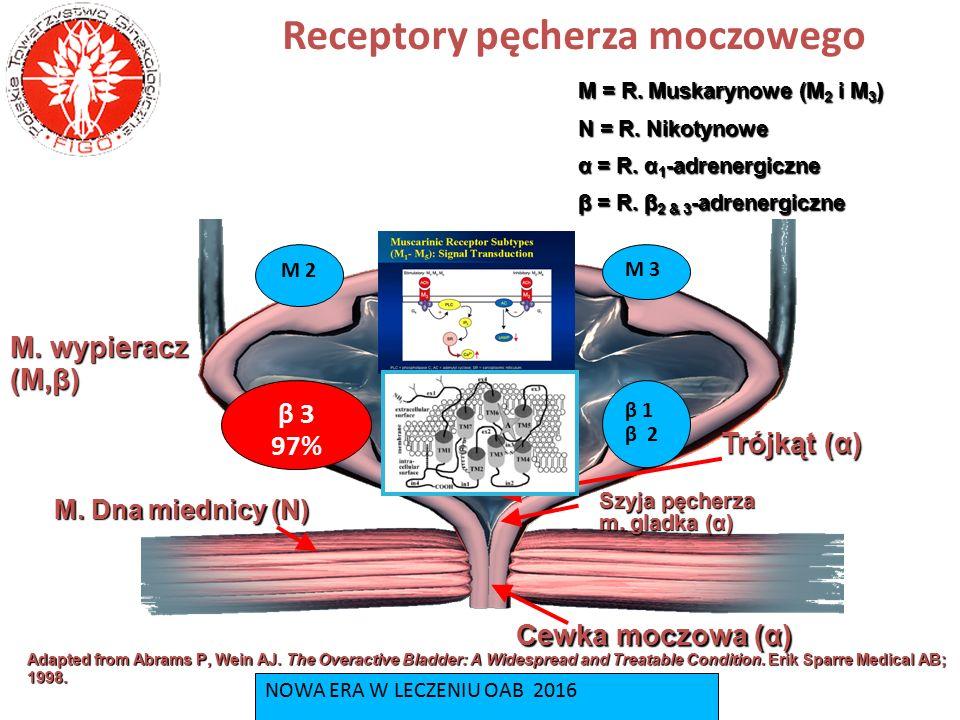 Receptory pęcherza moczowego