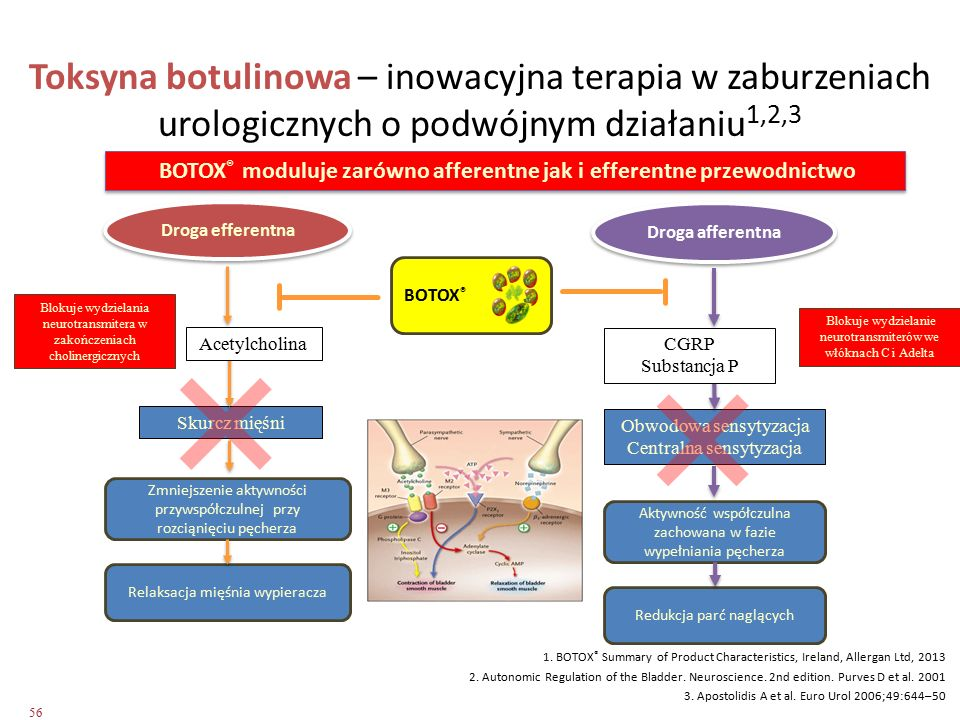 BOTOX® moduluje zarówno afferentne jak i efferentne przewodnictwo