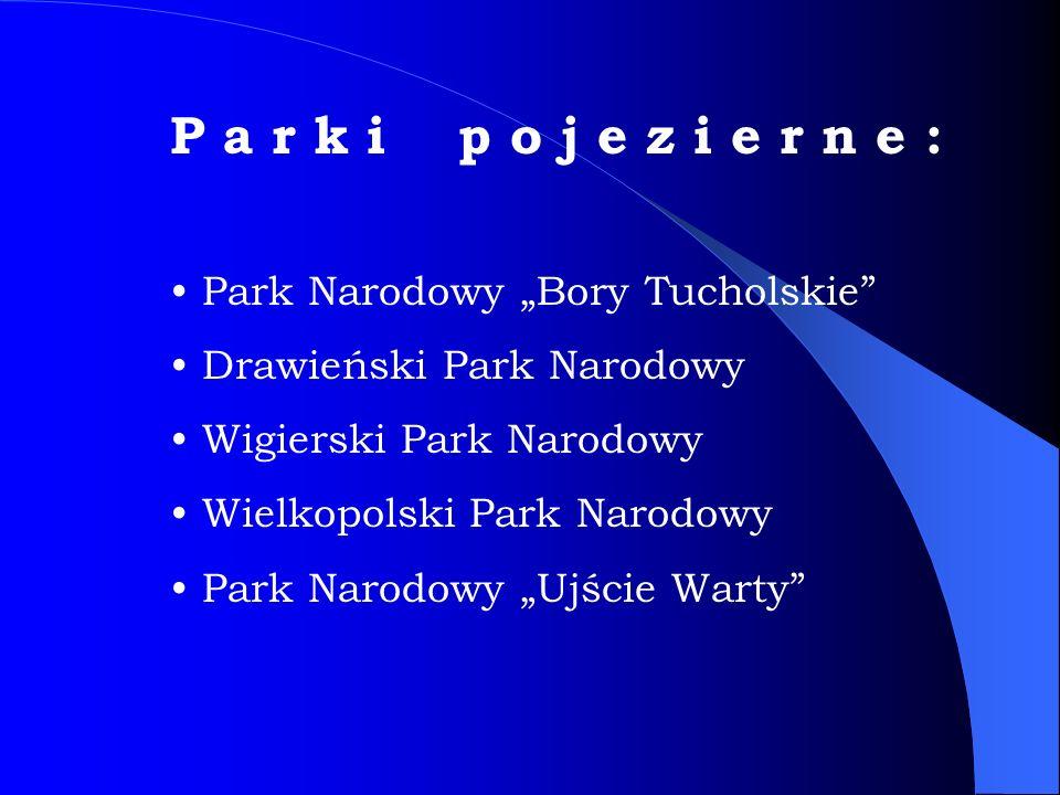 """P a r k i p o j e z i e r n e : Park Narodowy """"Bory Tucholskie"""