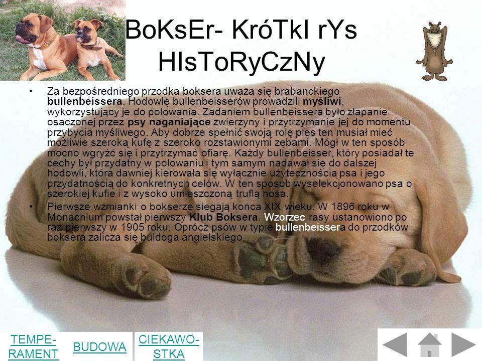 BoKsEr- KróTkI rYs HIsToRyCzNy