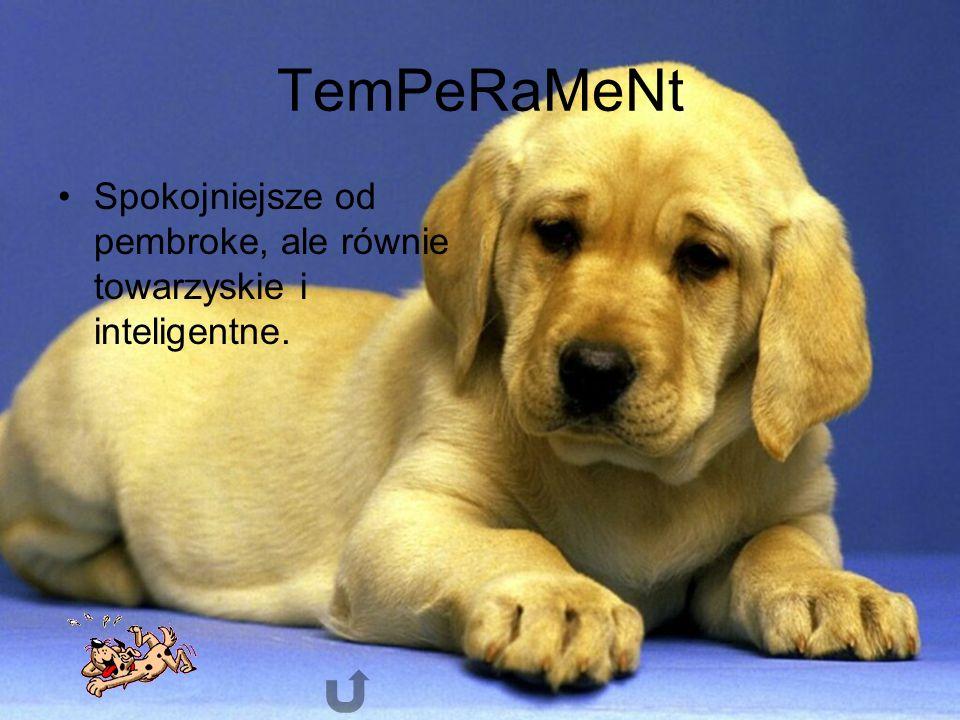 TemPeRaMeNt Spokojniejsze od pembroke, ale równie towarzyskie i inteligentne.